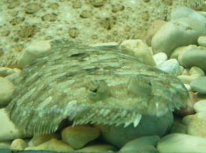#ドゥブロヴニク水族館 #クロアチア #魚